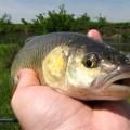 Pescuitul la clean cu momeli naturale