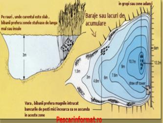 localizarea bibanului