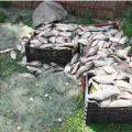 Sanciuni si pedepse aplicate pescarilor si braconierilor din UE
