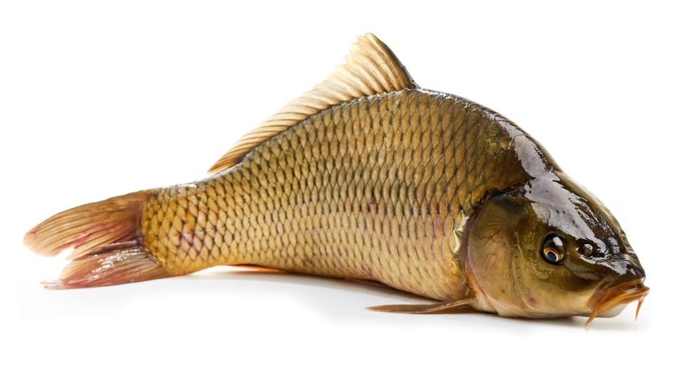 Prohibitie pescuit 2020